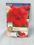 BEGONIA DOUBLE RED X3