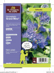 CARYOPTERIS GRAND BLEU 4 L