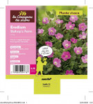 ERODIUM BISHOP'S FORM ROSE 0,75 L