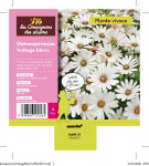 OSTEOSPERMUM VOLTAGE BLANC 3 L