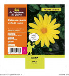 OSTEOSPERMUM VOLTAGE JAUNE 3 L