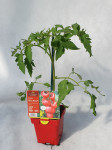 TOMATE HONEY MOON 0,75 L
